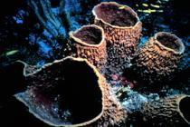 Dünyanın en eski hayvan fosili 365 milyon yıl yaşında