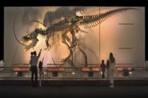 Türkiye'de fosil dinozor var mı?