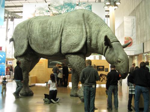 En büyük memeli fosilleri Ankara'da