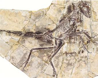 130125_fosil.hlarge