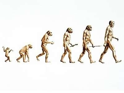 evrim-maymun