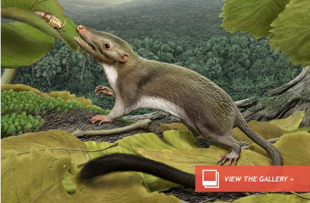 shrew-sized Cretaceous-age animal, Ukhaatherium nessovi