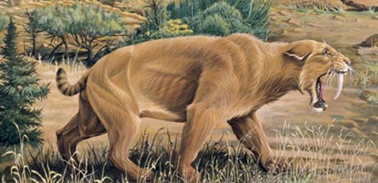 031513-floridada-bulunan-5-milyon-yllk-fosil-artt-1