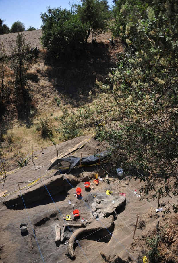 Handout photograph of buried remains of a Columbian mammoth seen at a site where where archeologists from Mexico's INAH are working in Mexico City