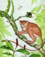 primata-stramos-oameni-afp