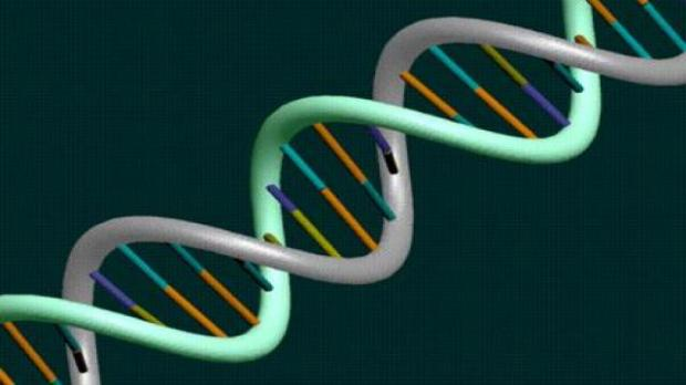 11-07-2013-human-chromosomes,-the-mouse-has-been-created