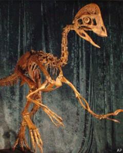 140320115627_anzu_dinosaur_skeleton_281x351_ap