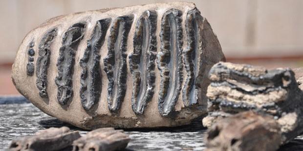page_samsunda-2-milyon-yillik-mamut-fosili-cikti_859110732