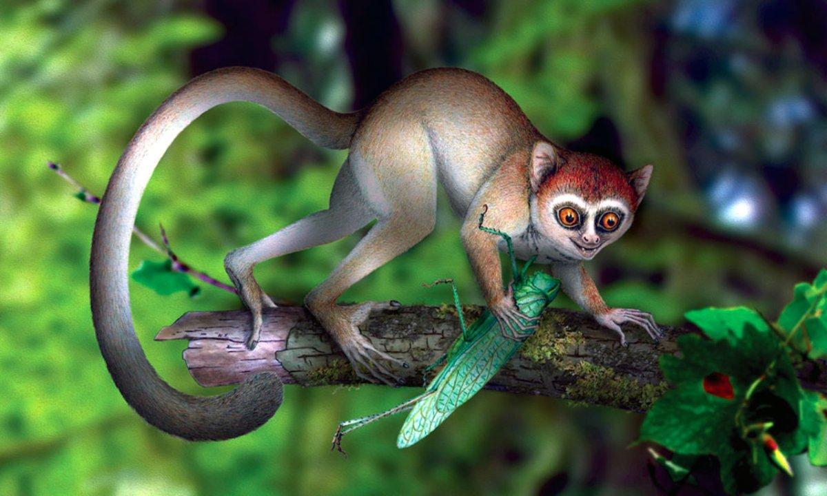 Çin'de en eski primat fosili bulundu