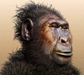 image_1603-Paranthropus-boisei