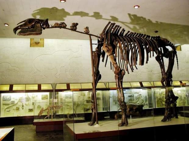 indricotherium(1)