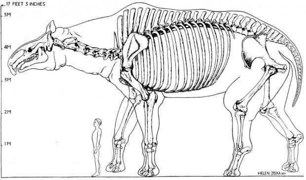 paraceratherium-restoration-990x585