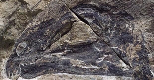 dinozor,CJnRVg6f4UqKnCmloRxhpg