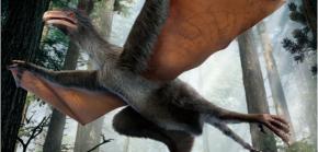 Kanatlı-dinozor-625x300