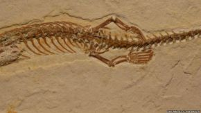 150724041410_four_legged_snake_fossil_624x351__nocredit