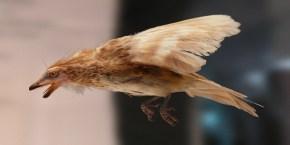 amber-icerisinde-99-milyon-yillik-dinozor-kusu-kanadi-bulundu-bilimfilicom