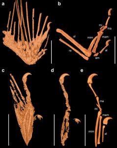 X-ray ile oluşturulmuş kanat modelleri. Image: Nature