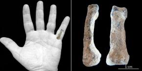 el-kemigi-fosili-modern-elin-en-az-2-milyon-yil-once-varoldugunu-gosterdi