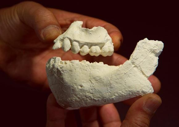 image_2848_1-Australopithecus-deyiremeda